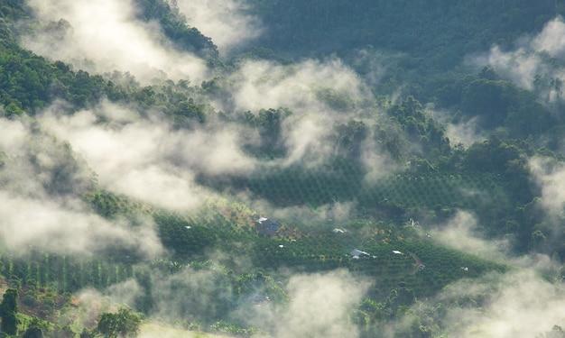 국립 공원에서 비 포레스트. 아름다운 가을 날 아침 안개에 싸인 다채로운 혼합 숲