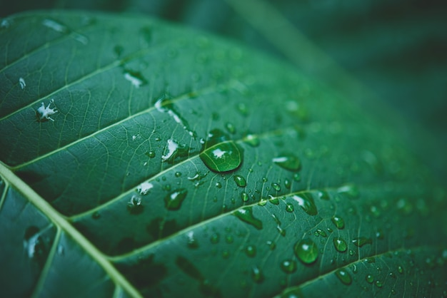 Rain water on a green leaf macro.