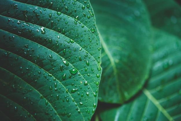 Дождевая вода на макросе зеленого листа.