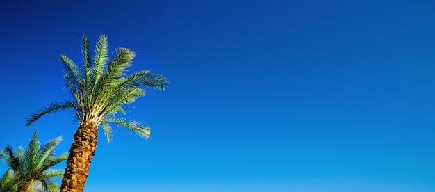 무지개 하늘 배경에 야자수 색깔. 환상적인 톤의 사진 빛 누출. 열대, 이국적인 휴가. 크리 에이 티브 배너. 여름 여행 컨셉입니다.
