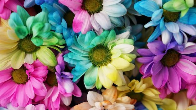 Радужные ромашки. радужный цветок. букеты цветов радуги цветут, выборочный фокус. разноцветные ромашки цветы узор фона