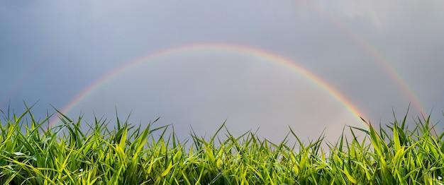新鮮な緑の草のあるフィールド上の暗い雨の空の虹