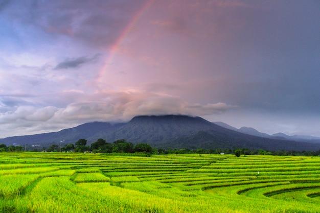 Радуга над красивыми рисовыми полями в азии