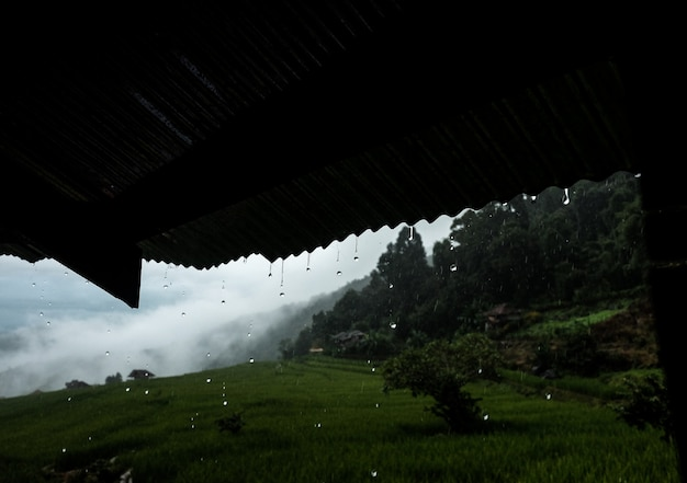 Raindrop falling from roof in paddy field