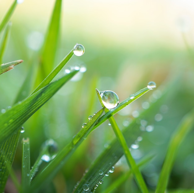 Raindrops on the green grass plant in the garden