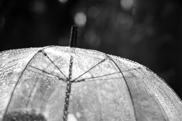 透明な傘の雨滴。黒と白