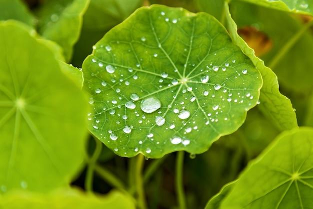 녹색 식물에 빗방울, 녹색 잎에 이슬 방울
