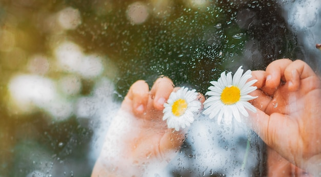 村の窓ガラスの雨滴、子供たちの手の中のカモミールの花の目が雨を見ています。