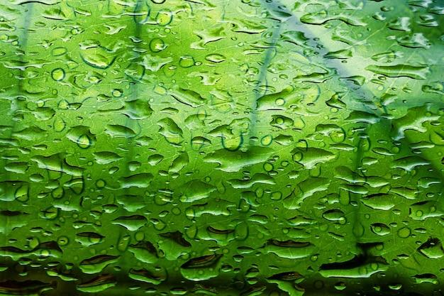 緑の葉のテクスチャと背景の雨滴。