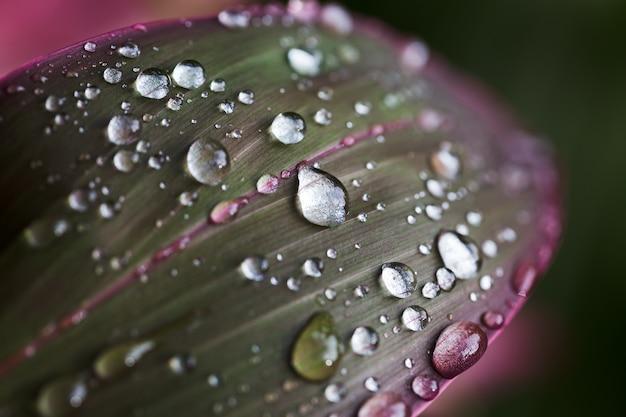 Raindrops on read-green leaf.