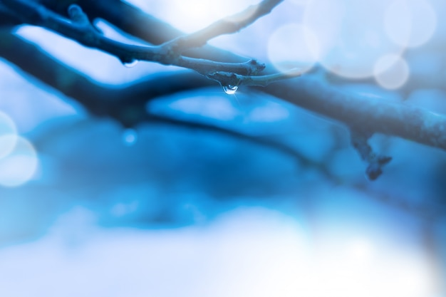 Raindrops on a winter branch of a tree in a forest during a thaw. blue cold background and place for text.