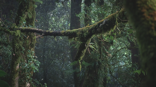 Rainforest in doi inthanon national park , thailand