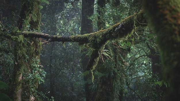열대 우림 도이 inthanon 국립 공원, 태국