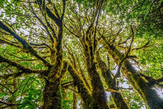 タイ北部の熱帯雨林