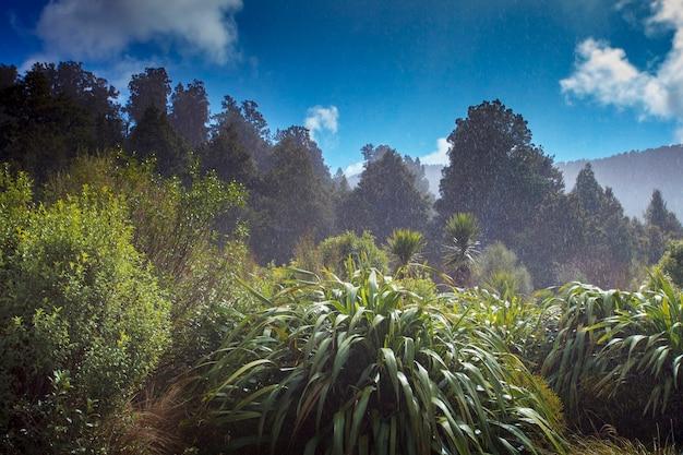 뉴질랜드 사우스랜드 호수 matheson의 상록수 숲 위로 비가 내립니다.