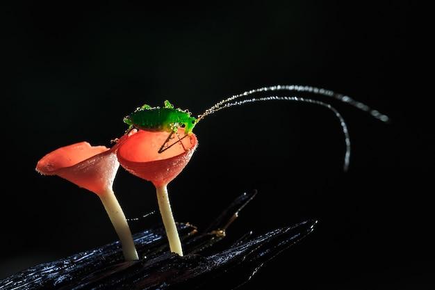 비오는 날과 빨간 버섯, 핑크 번 컵 버섯에 메뚜기,