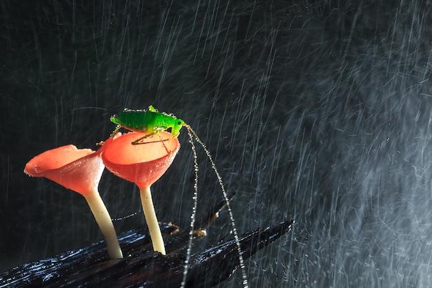 赤いキノコの雨の日とバッタ