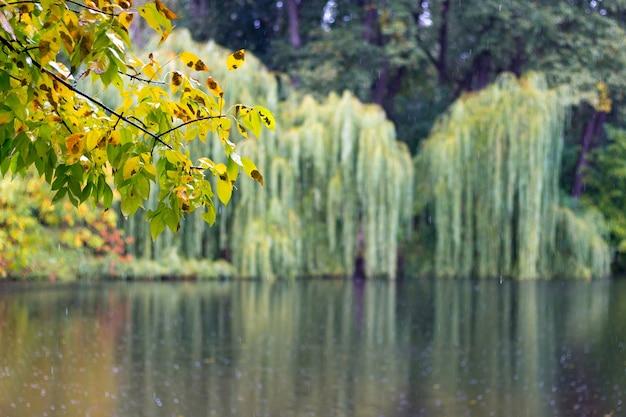 都市公園での雨の日。木々が湖の水に映る