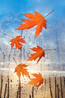 Rainy day weather. maple red leaf on glass with natural water drops. fallen leaves on wet window