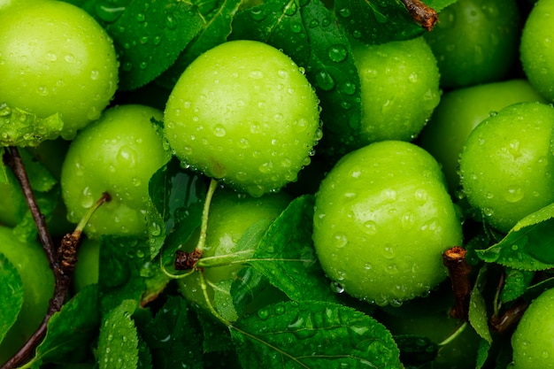 Rainy green plums with green leaves close-up