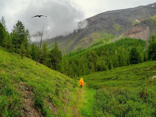 雨の山の森、悪天候でのシングルトレッキング。登山道の黄色いレインコートを着た観光客の姿。