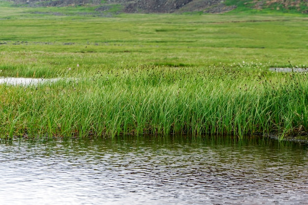 Raised bog with an open water lake in the mountain tundra
