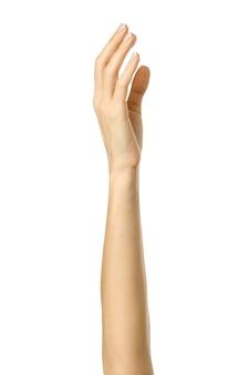 손을 들어 투표하거나 도달합니다. 프랑스 매니큐어 몸짓 흰색 배경에 고립 된 여자 손. 시리즈의 일부