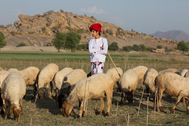 ラージャスターンの部族の男は、フィールドで伝統的なカラフルなカジュアルで牧畜の羊の群れを着ています