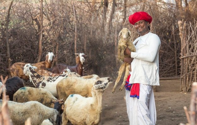 Rajasthani tribal man wears traditional colorful casual and holding lamb in hand