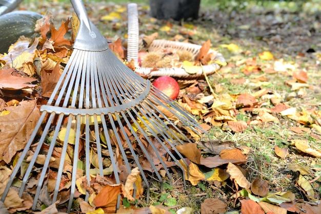 Rake in leaves on garden