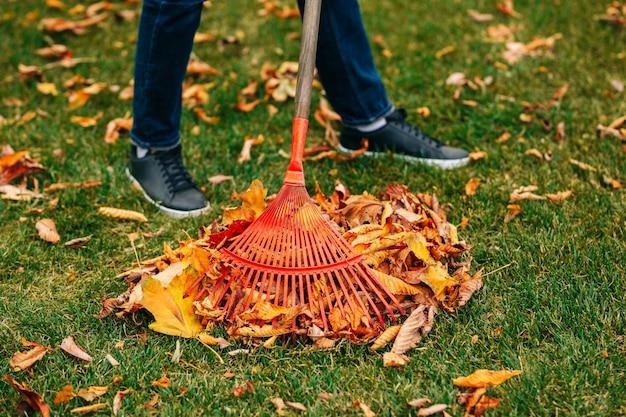秋に落ち葉のある熊手。寒い季節のガーデニング。秋に黄色の葉を掃除します。