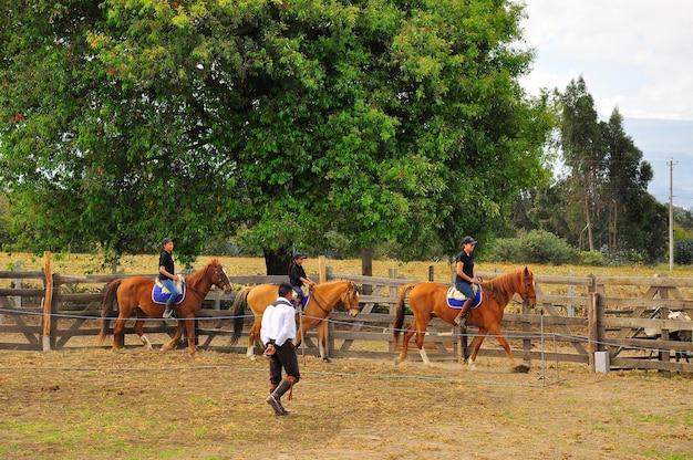 Ранчо феникс, латакунга, котопакси, эквадор, 12 августа 2016 г. всадники учатся ездить на лошадях.