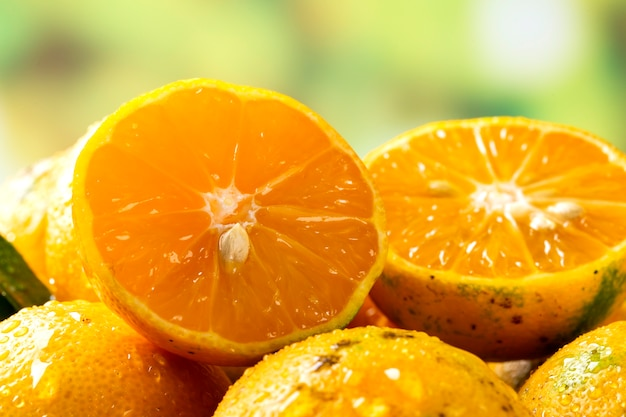 Rangpur 라임 또는 포르투갈어로 된 limao cravo, 익은 과일로 덮여 있습니다.