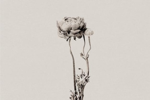 Ranunculus in scala di grigi con media remixata con effetto risograph
