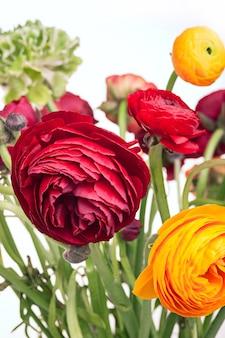 Ранункулюс букет красных цветов на белой стене