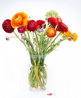 Mazzo di ranunkulyus di fiori rossi su un bianco