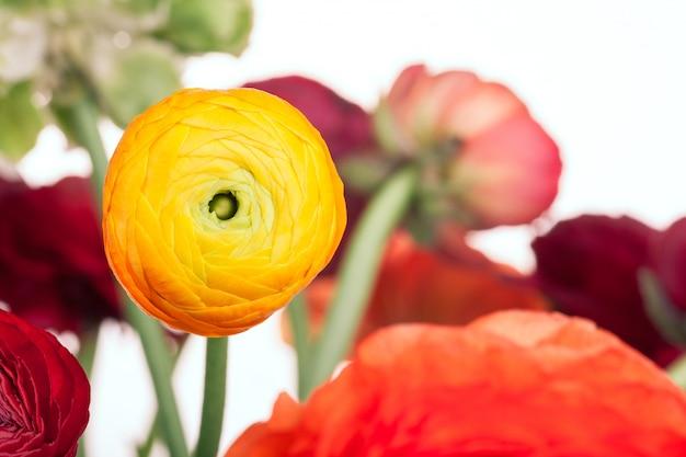 Ranunkulyus bouquet di fiori rossi