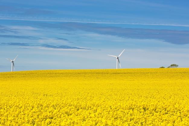 Поле рапса с двумя ветряными турбинами на заднем плане