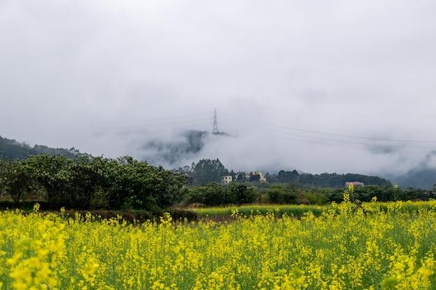 Цветы рапса под дождем в сельской местности, а в далеких горах туман
