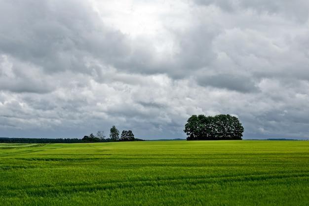 여름 시간에 유채 필드입니다. 태양이 있는 푸른 하늘 아래 노란색 유지종자 유채 밭