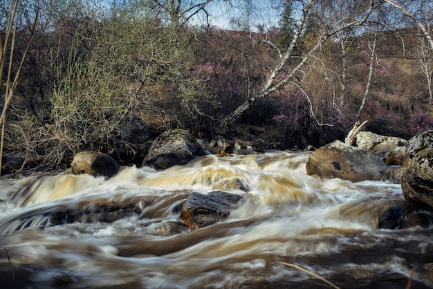 Rapid creek with cascades over rocks. blur running water between wet boulder. photo on long exposure. small mountain river close-up. Premium Photo