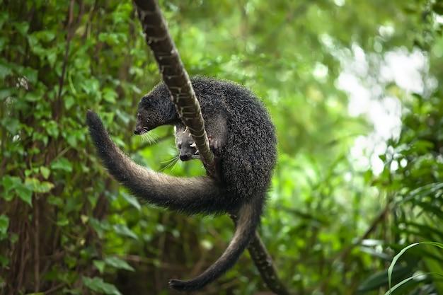 빈 투롱의 희귀하고 재미있는 동물