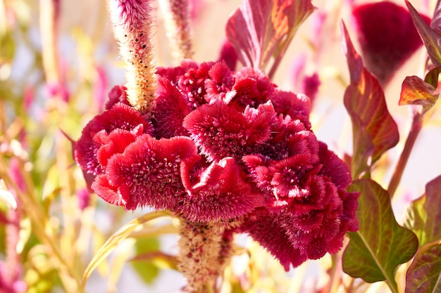 Rare exotic red flower in a garden