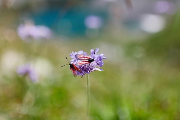Редкие горные цветы и растения, растущие на склоне кавказских гор, солнечный рассвет