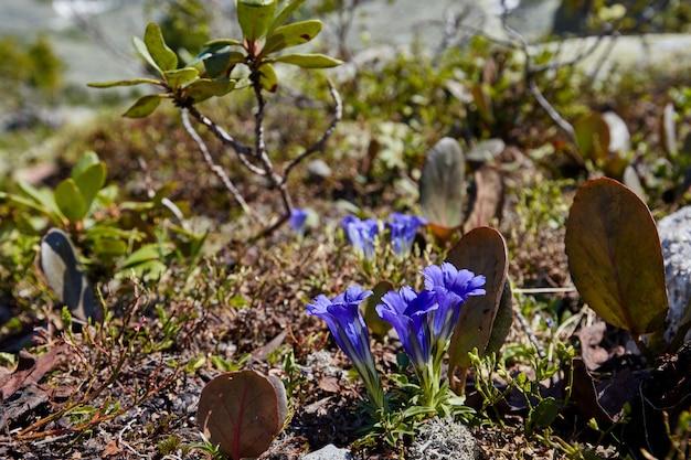 В ясный солнечный день возле горного ручья растут редкие горные растения и цветы. удивительная флора гор, растения занесенные в красную книгу