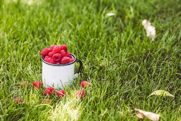 Raspberries in a cup on grass. fall mood. summer time. copy space