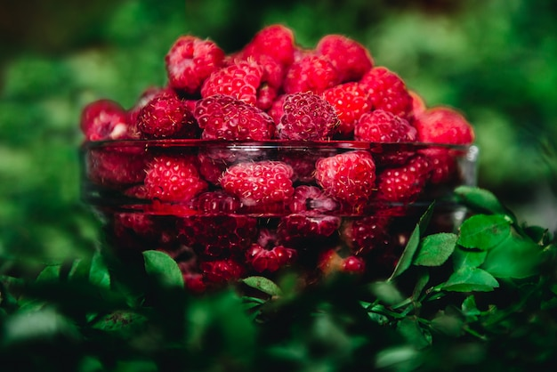 Raspberries in a glass bowl with twigs and leaves on a dark. healthy fresh, seasonal fruit to eat.