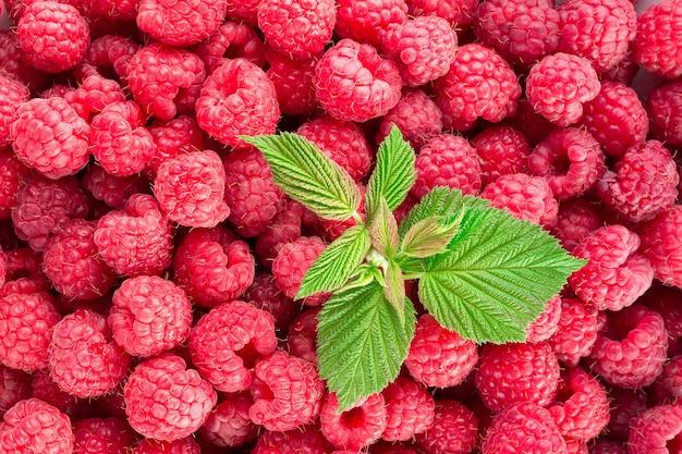 Raspberry. fresh organic berries