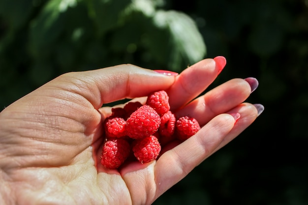 Raspberry in hand