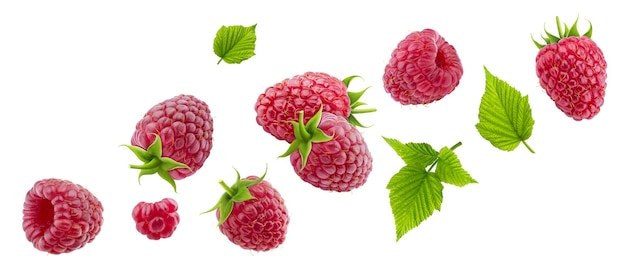 Raspberry isolated on white background with clipping path, collection of falling raspberries with leaves